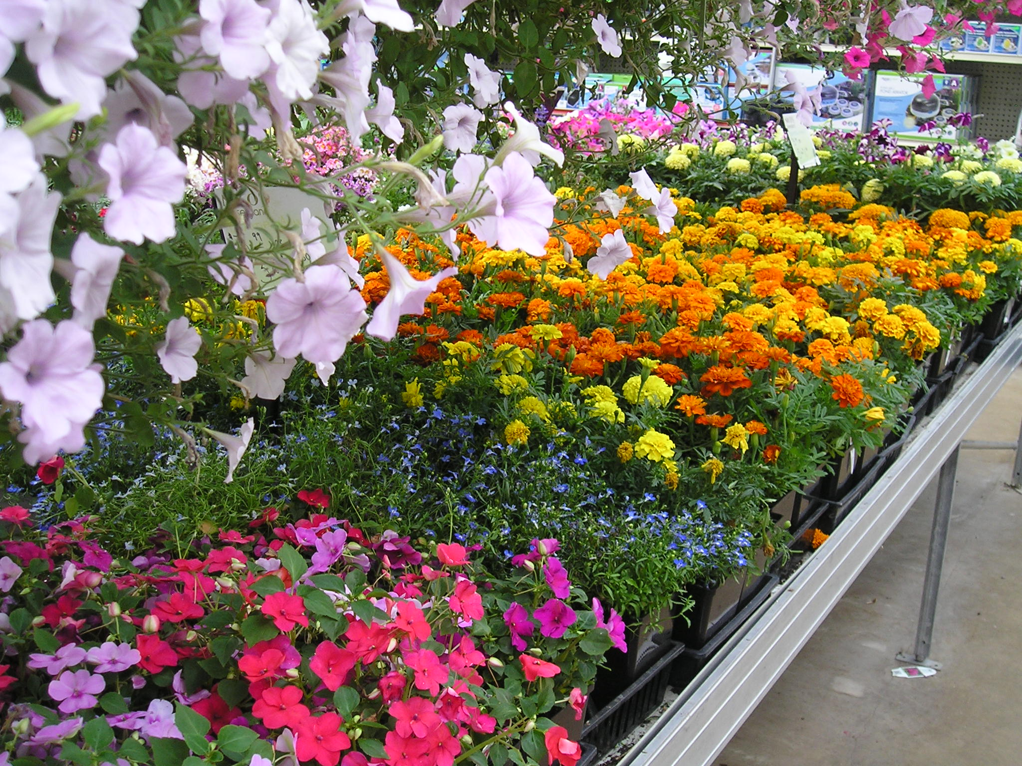 Fresh grown annuals for touching up....